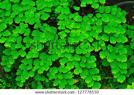 Green fern leaves - stock photo