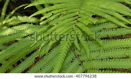 Green fern leaves - stock photo