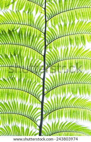 green fern leaves close up - stock photo