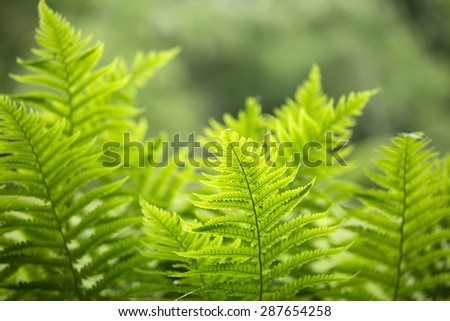 Green fern leaves on green background
