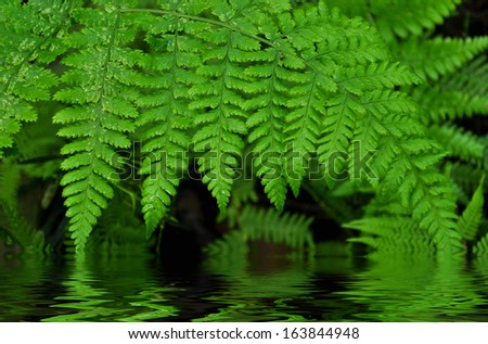 green fern water background - stock photo