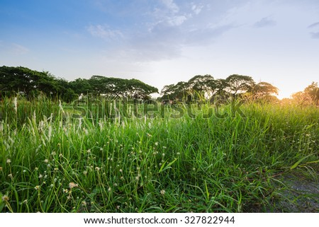 Green field against sunlight in sun set time - stock photo