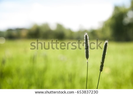 Green field, against the blue sky. Spring, summer background