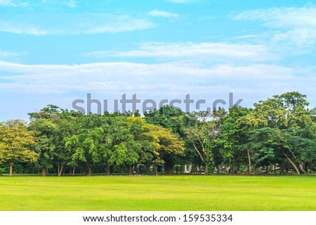 green field and big tree with blue sky - stock photo