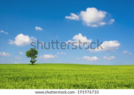 Green field and blue sky cloud