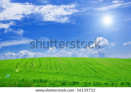 Green field and blue sky conceptual image. Picture of green field and sky in summer.