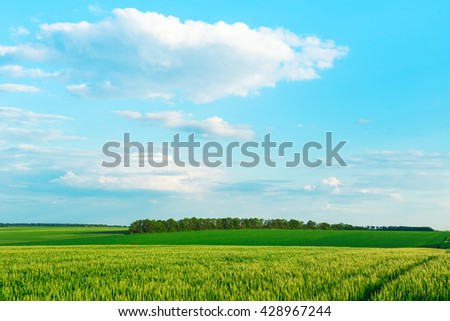 Green field and blue sky with light clouds. Good day - stock photo
