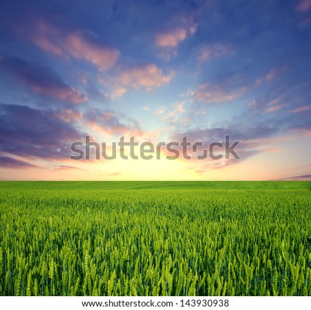 Green field and sunrise sky as background - stock photo