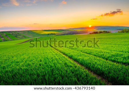 Green field at beautiful sunset at South Moravia, Czech Republic - stock photo