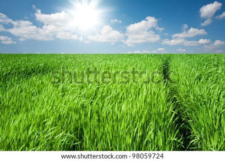 Green field at spring - stock photo