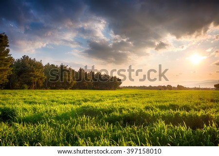 Green Field at sunset