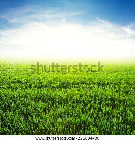 green field at the early morning - stock photo