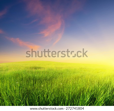 Green field. Beautiful summer landscape - stock photo