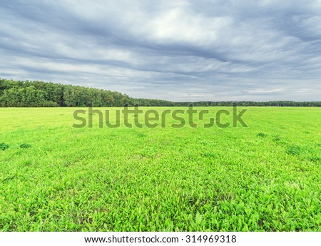 Green field by the forest at cloudy day time. - stock photo