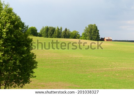 Green field in late spring.