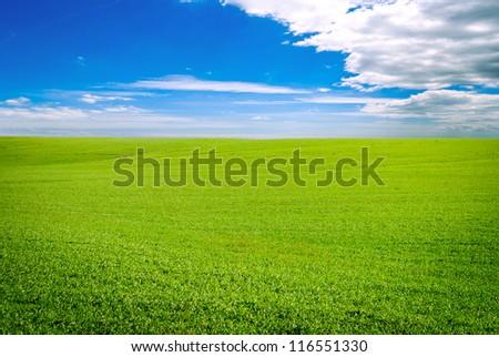 Green field landscape - stock photo