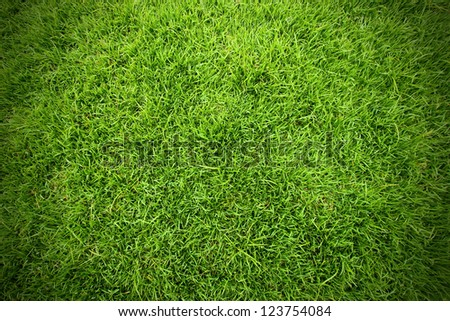 Green field of grass background - stock photo