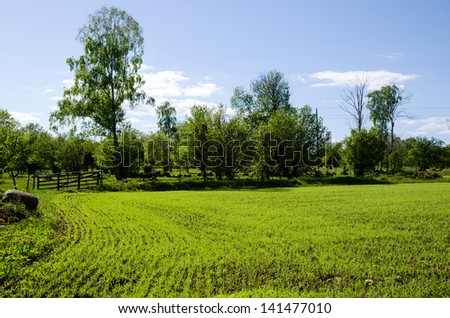 Green field of seedlings in rows and an old wooden gate. From the island Oland in Sweden. - stock photo
