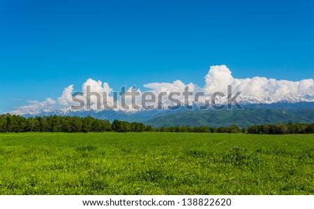 Green field, springtime - stock photo