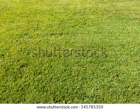 green field texture, texture of the grass - stock photo