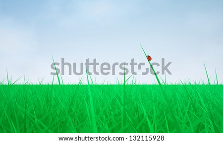 Green Field/ The Three-dimensional Scene: Green Grass and Blue Sky - stock photo