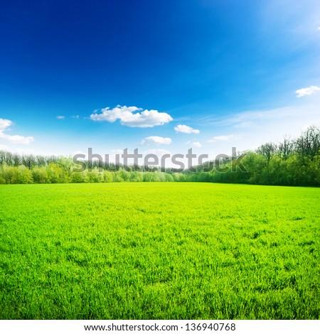 Green field under blue sky. Beauty nature background - stock photo