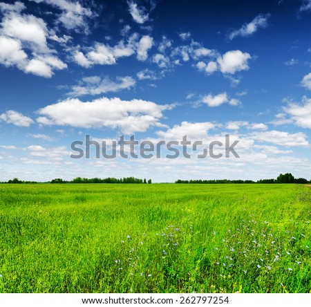 Green field under the blue sky with white clouds. Forest visible on the horizon. Beautiful summer landscape. - stock photo