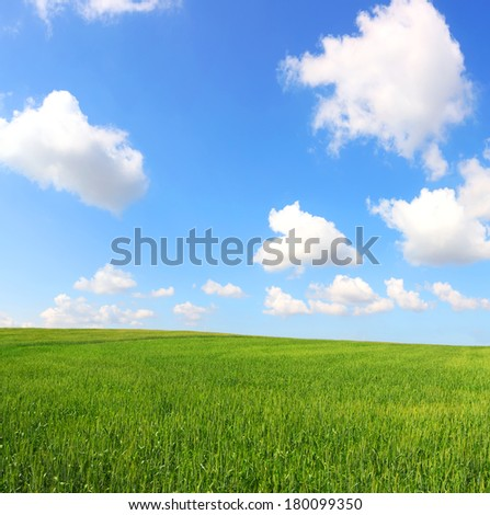 Green field under the shining sky. Spring pastoral landscape