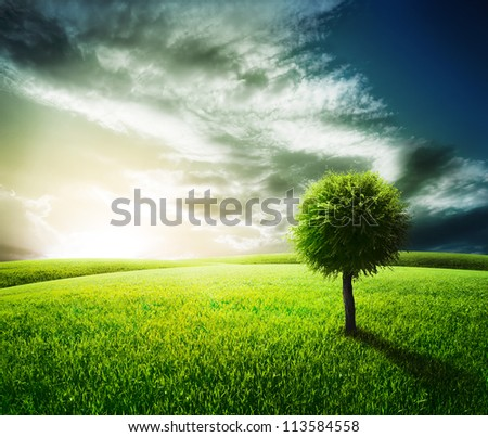 Green field with alone tree under blue sky. Beauty nature background - stock photo