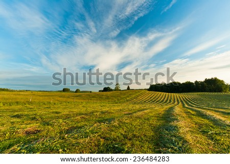 Green field with beautiful blue sky and clouds
