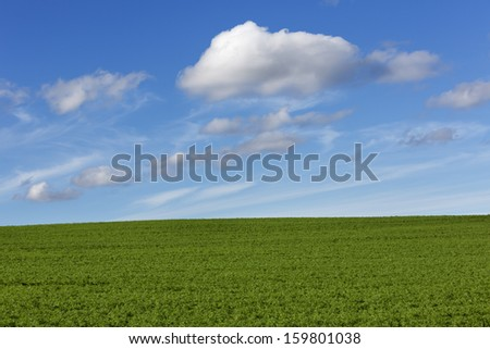 Green field with blue cloudy sky - stock photo