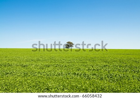 Green field with blue sky and a single tree centred - stock photo