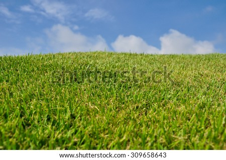 Green field with bright sky background in summer season