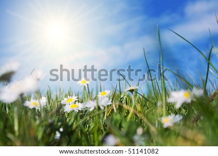 green field with daisies in back the sun shinning - stock photo