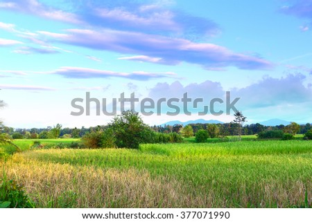 Green field with evening sky .