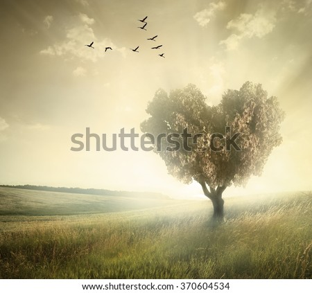 Green field with heart shape tree under blue sky. Valentine concept background - stock photo