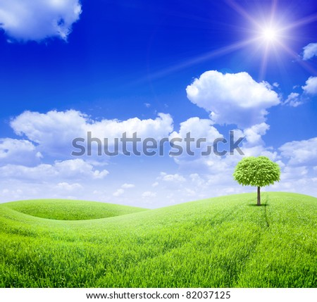 Green field with one tree under blue sky