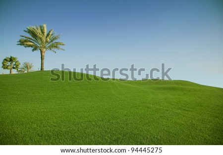Green field with palm tree. Golf club