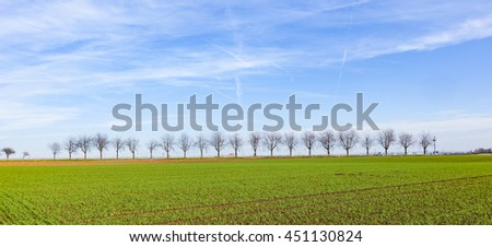 green field with tree alley under blue sky
