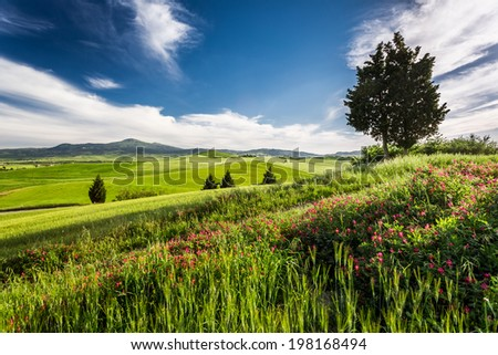 Green fields and meadows in the valley of Tuscany - stock photo