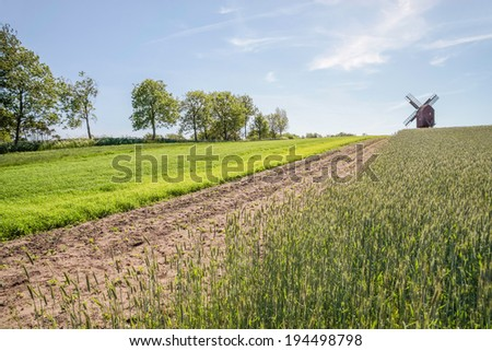 Green fields and windmill