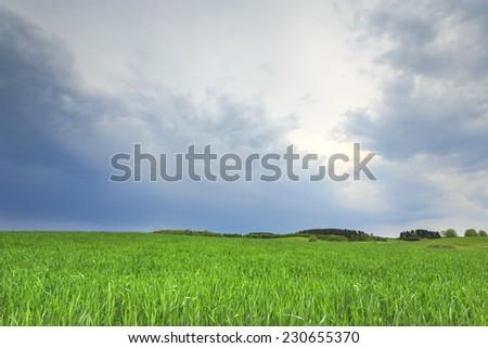 Green fields in north Poland. Pomerania province, Kashubia district/Green fields background - stock photo