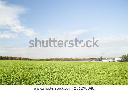 Green fields of crops in Lancaster County, Pennsylvania. - stock photo