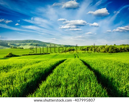 Green fields of Moravia, Czech Republic