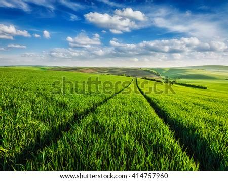 Green fields of Moravia, Czech Republic - stock photo