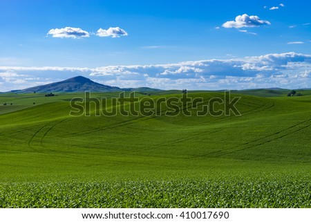 Green fields of wheat in the Palouse region of Washington state - stock photo