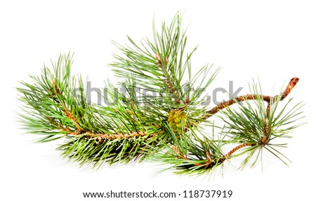Green fir branch with fir cone isolated on white