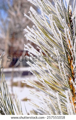 green fir tree covered with frost - stock photo