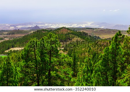 Green Fir Trees on Mountain Landscape on Canary Island in Spain