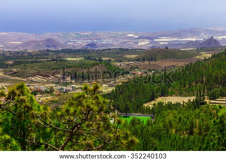 Green Fir Trees on Mountain Landscape on Canary Island in Spain at Day